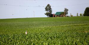 Corn Fields in Wisconsin