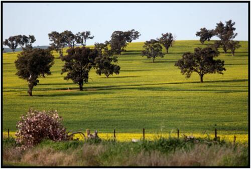 Wagga - Harefield, NSW - 21